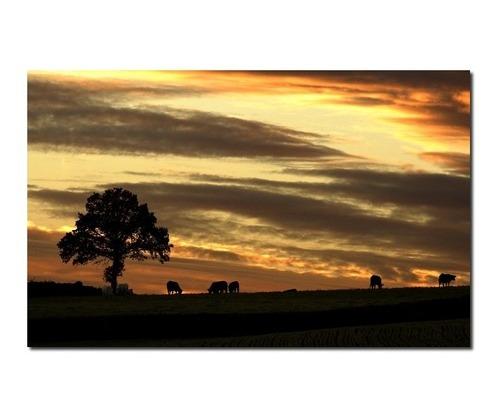 vaches a laube par didier brasselet Sélection des photographes mabellephoto.com du mois de juin