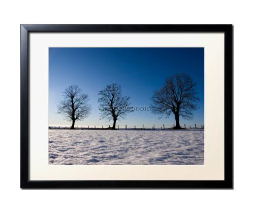 Trois arbres en Hiver par Yannick Fel
