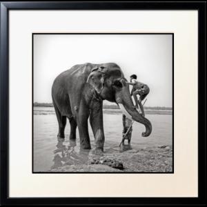 elephant par pierre ameye Découvrez la sélection des photographes mabellephoto de février