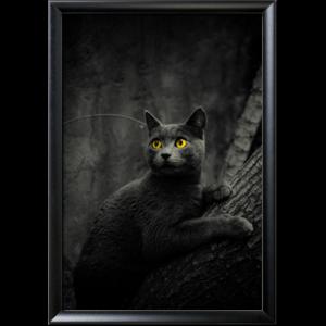 the cats par timothe decamous Découvrez la sélection des photographes mabellephoto de février