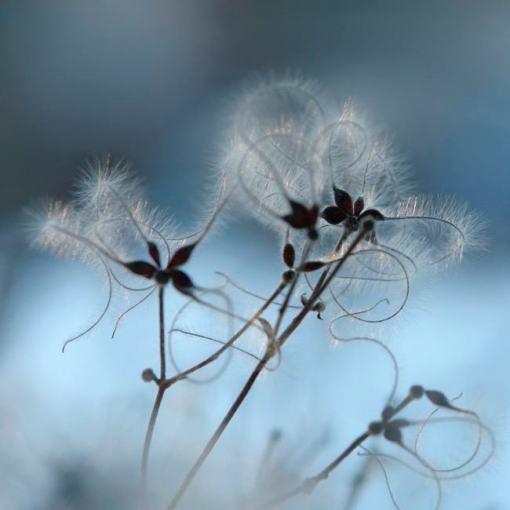 Winter light par Marie-claude Strausz