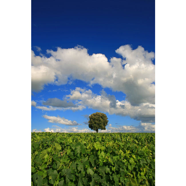 idv00102 gastronomie olivier roux Découvrez la sélection des photographes mabellephoto du mois d'août