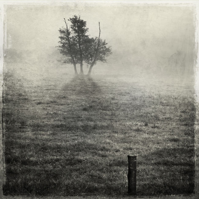 three trees in a meadow par patrick dagonnot Interview photographe : découvrez le talent de Patrick Dagonnot