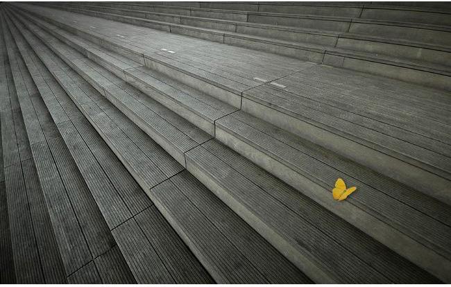 le papillon par laurent hunziker1 Découvrez la sélection des photographes mabellephoto du mois de septembre